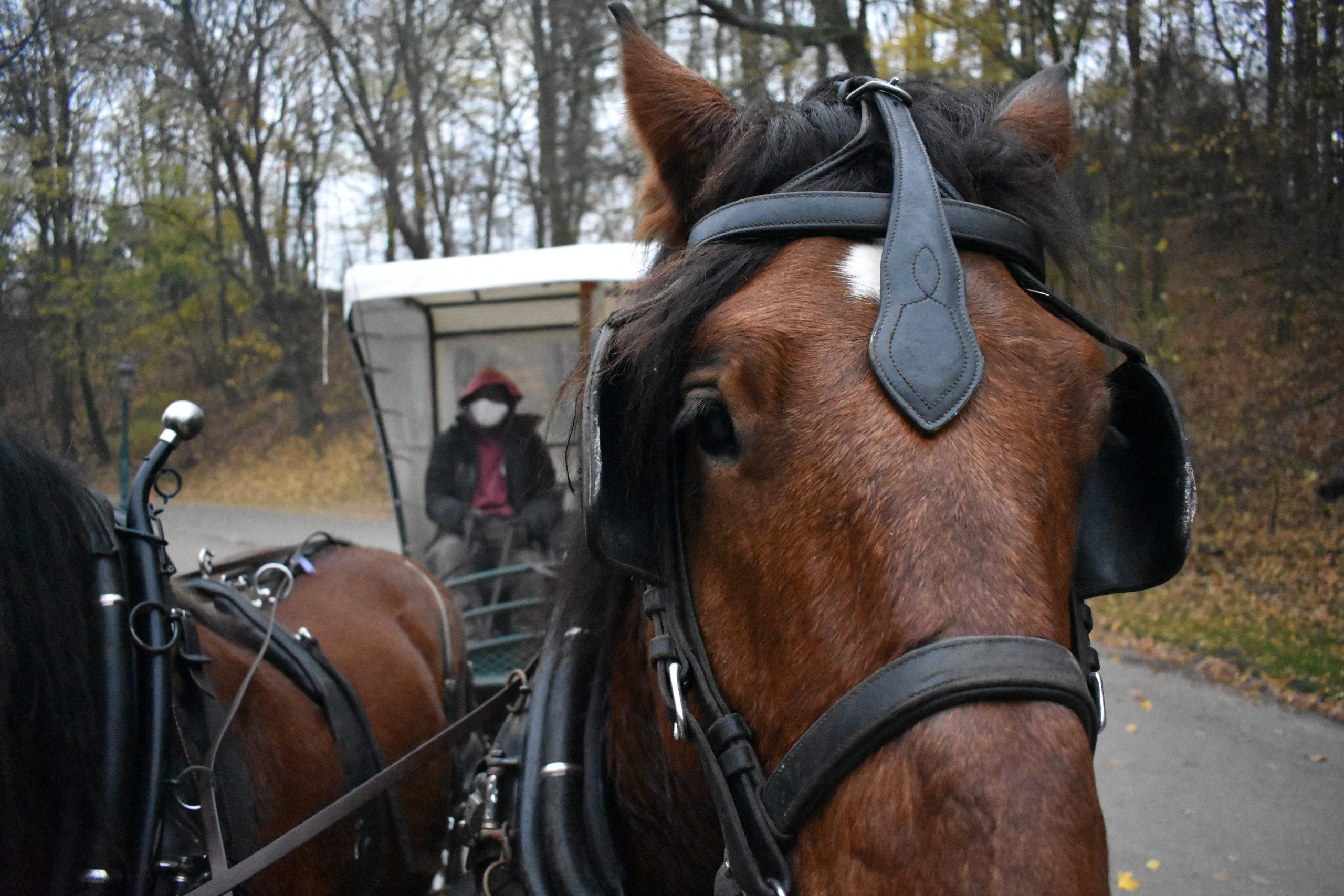 L'énergie cheval dans les parcs bruxellois et en forêt de Soignes.