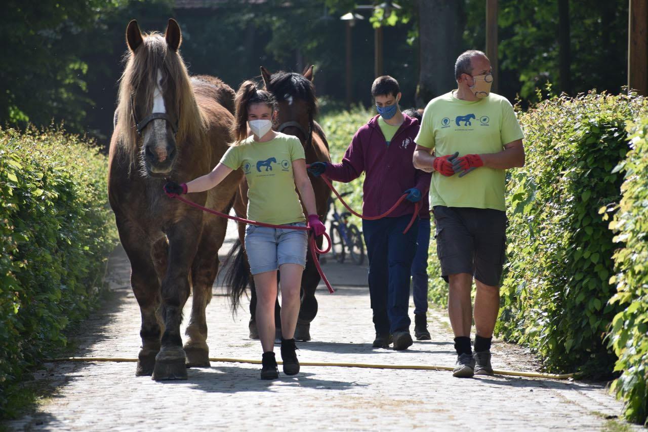 Nos chevaux, les véritables stars de Rouge-Cloître!